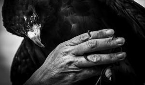 Sharon Bindon – Falconer
