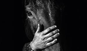 Horse Trainer – Connie Colfox