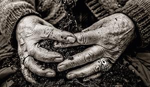 Gardener – Rosemary Verey
