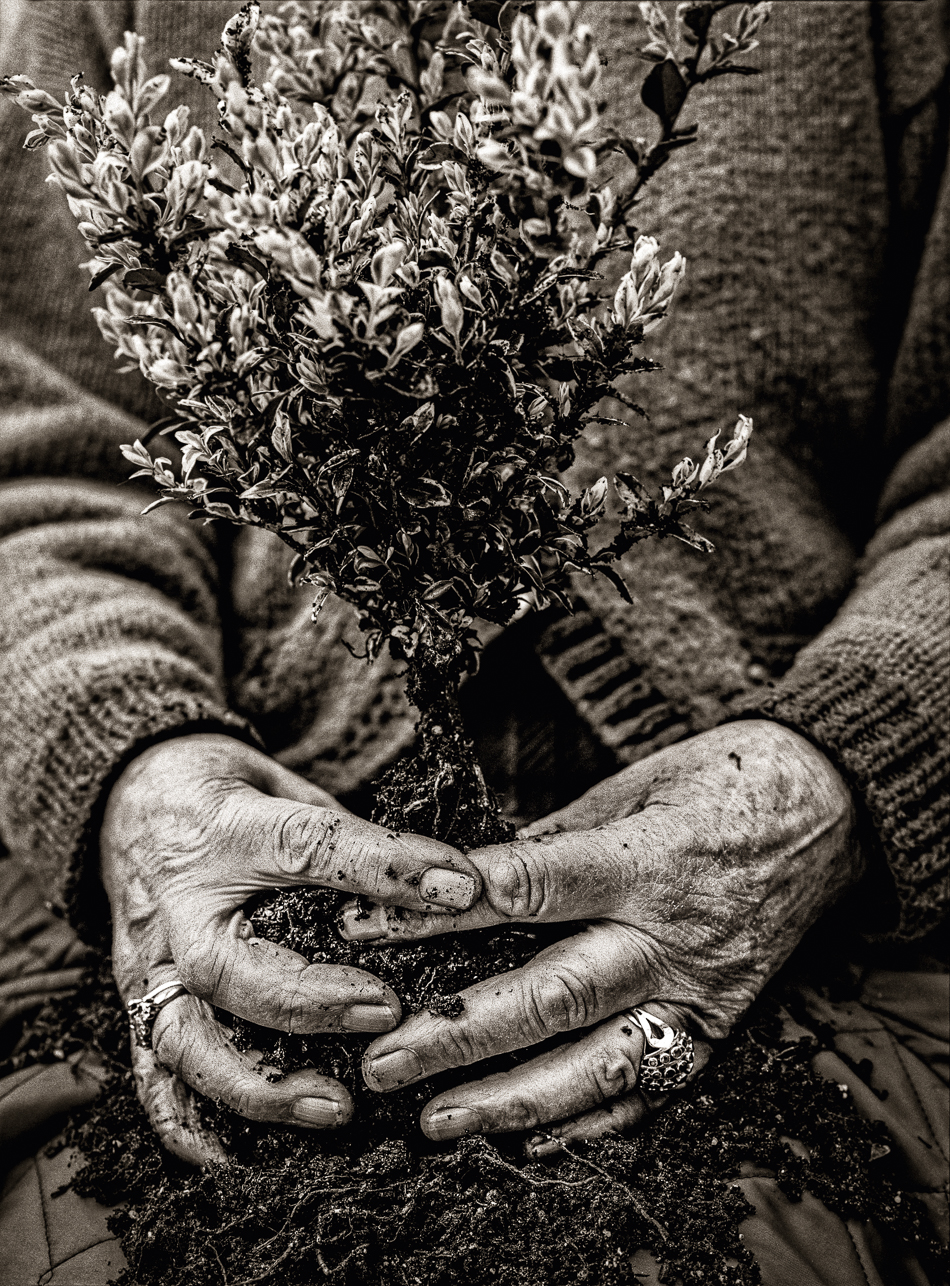Rosemary Verey Gardener